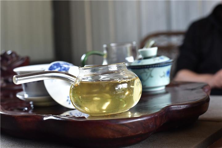普洱茶原料标准:大叶种?小叶种?