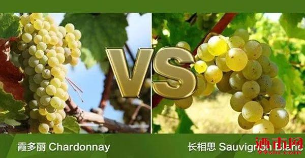 """长相思、霞多丽,两个白葡萄酒界的""""网红""""各有什么魅力?"""